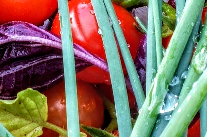 Tools and Tips for Your Kitchen Garden